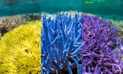 PANTONE crea nuevos colores inspirados en los corales en peligro de extinción