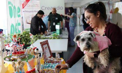 Ripley realiza segunda actividad para las mascotas de sus colaboradores