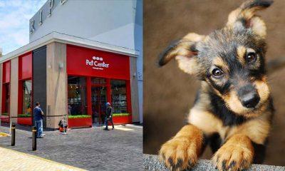 Inauguran primer centro de adopción de mascotas en el Jockey Plaza