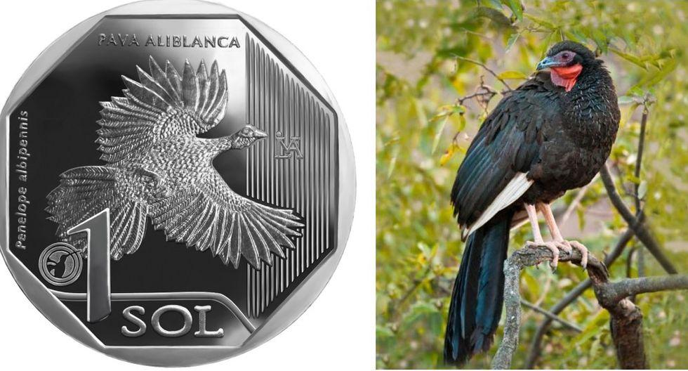Moneda peruana de la pava aliblanca es elegida la mejor del mundo